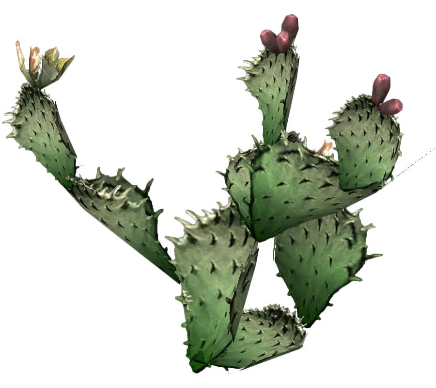Cactus with flower clipart image library Cactus Clipart PNG Photos - 11640 - TransparentPNG image library