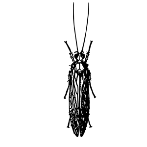 Caddisfly clipart png library stock Caddisfly clipart, cliparts of Caddisfly free download (wmf, eps ... png library stock