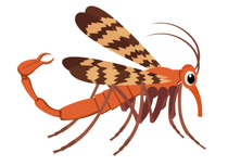 Caddisfly clipart freeuse download Search Results for caddis fly - Clip Art - Pictures - Graphics ... freeuse download