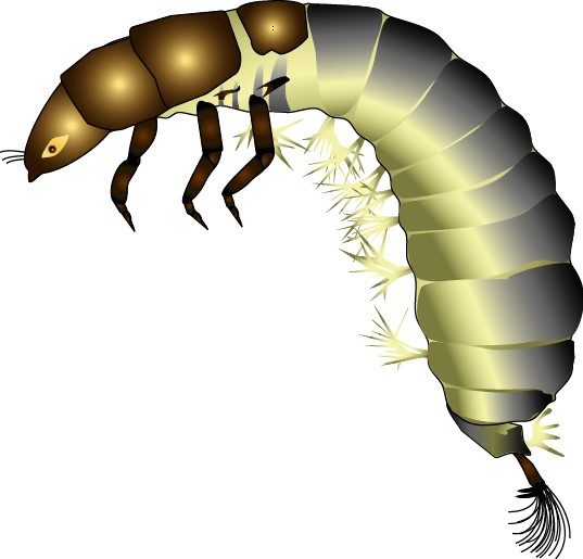 Caddisfly clipart banner freeuse download Trichoptera banner freeuse download