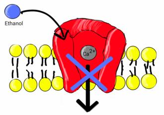 Calcium channel blockers clipart