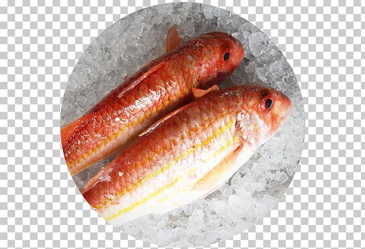 Caldo de peixe clipart clip art royalty free Restaurante Senhor Peixe Rascasse Scorpaena Scrofa Fish PNG, Clipart ... clip art royalty free