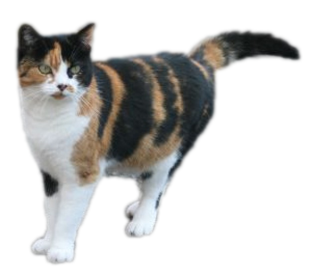 Tabby calico cat mix clipart clipart stock calico cat - Google Search | important to nobody but me! | Pinterest ... clipart stock