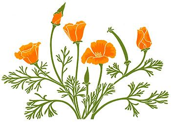 California poppy clipart