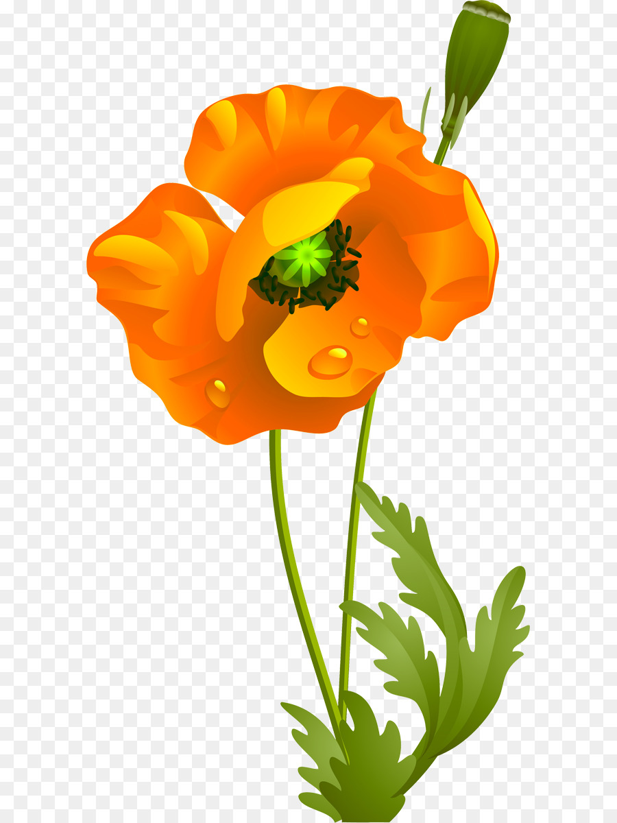 California poppy flower clipart picture royalty free stock Flowers Clipart Background png download - 647*1200 - Free ... picture royalty free stock