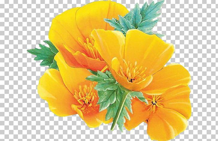 California poppy clipart free clip art black and white download Yellow Flower California Poppy PNG, Clipart, California Poppy, Cari ... clip art black and white download