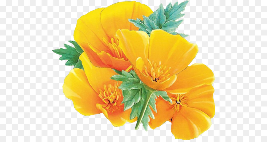 California poppy flower clipart jpg transparent download Green Leaf Background png download - 550*474 - Free Transparent ... jpg transparent download