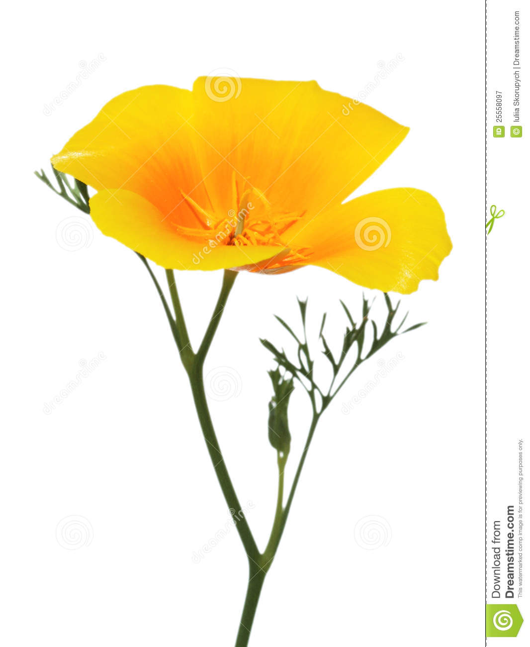 California state flower clipart image royalty free stock California Poppy Clipart - Clipart Kid image royalty free stock