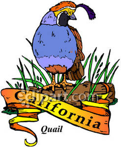 California state flower clipart clipart free State Bird, the California Valley Quail - Royalty Free Clipart Picture clipart free