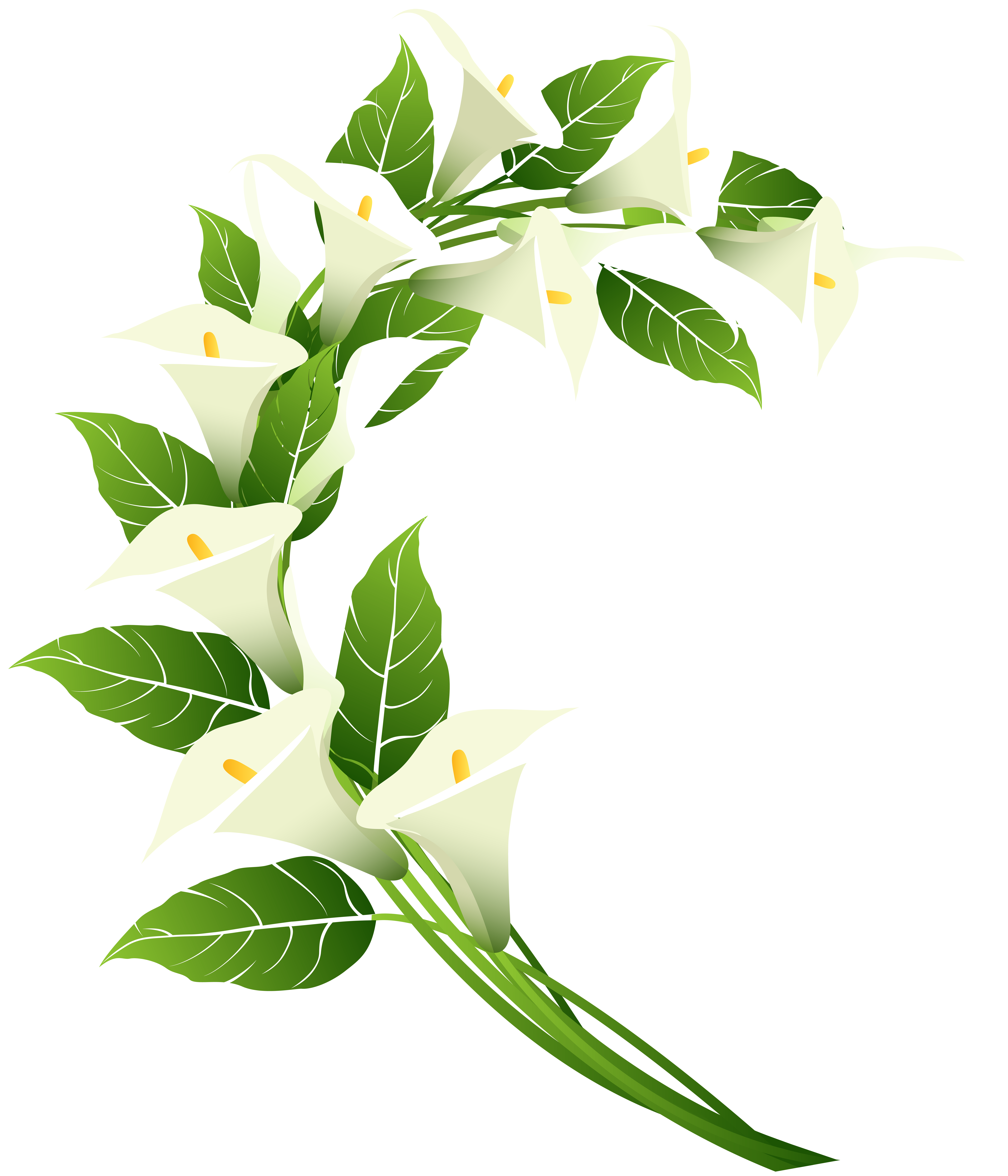 Calla lily border clipart svg free Calla Lily Decoration PNG Clip Art Image | Gallery Yopriceville ... svg free