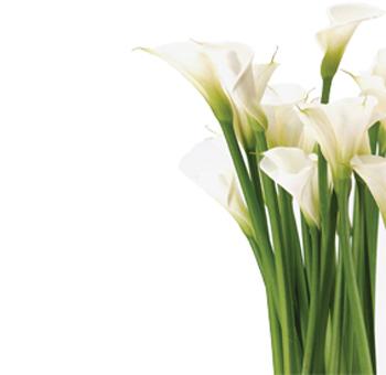 Calla lily border clipart clip free download Free Pictures Of Calla Lillies, Download Free Clip Art, Free Clip ... clip free download