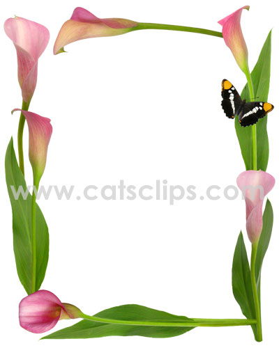 Calla lily border clipart graphic freeuse Pink Calla Lily Butterfly Border graphic freeuse