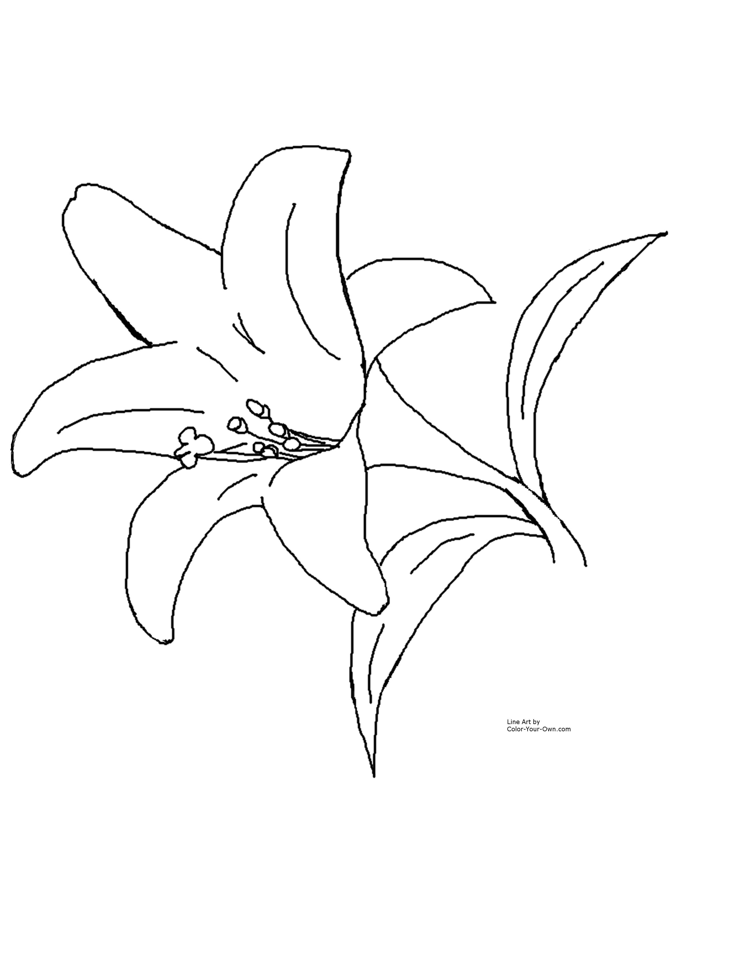 Easter lily spray black & white clipart jpg free download Calla Lily Drawing Outline at PaintingValley.com | Explore ... jpg free download