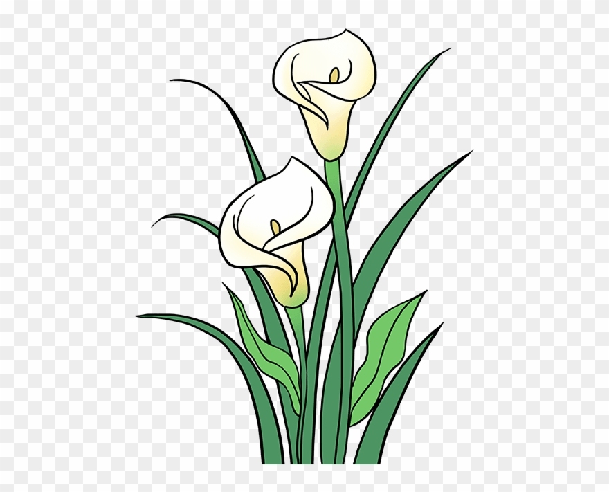 Calla lily clipart clipart freeuse download How To Draw Calla Lily - Drawing Clipart (#198815) - PinClipart clipart freeuse download