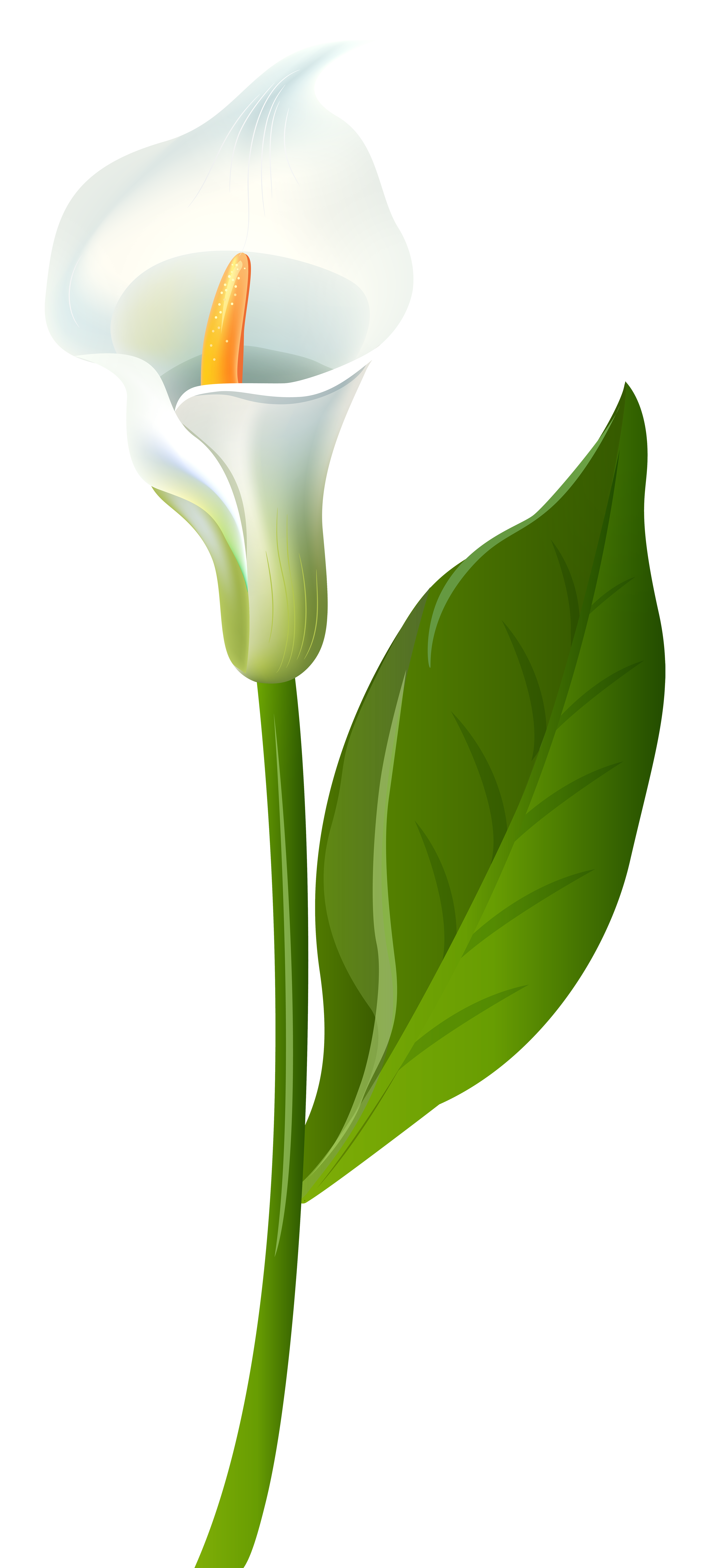 Free calla lily clipart graphic black and white stock Calla Lily Transparent PNG Clip Art Image | Gallery Yopriceville ... graphic black and white stock