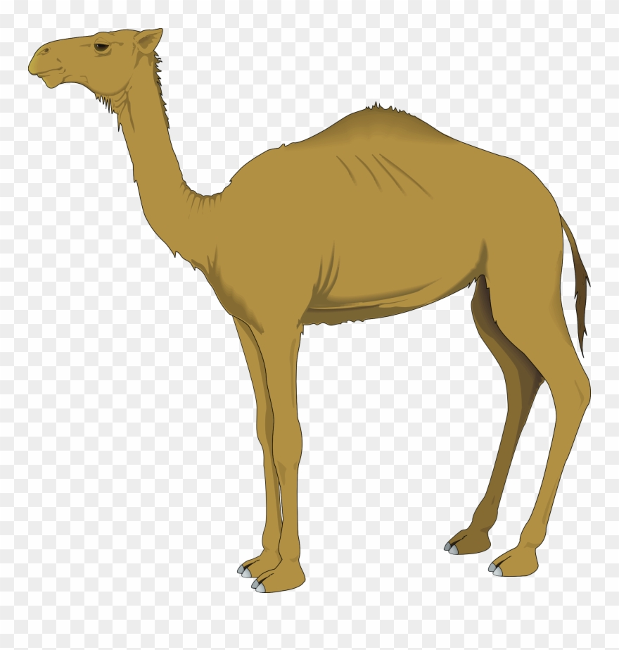 Camel clipart png clip freeuse library Clip Free Stock Camel Vector Tribal - Camel Clipart Gif - Png ... clip freeuse library