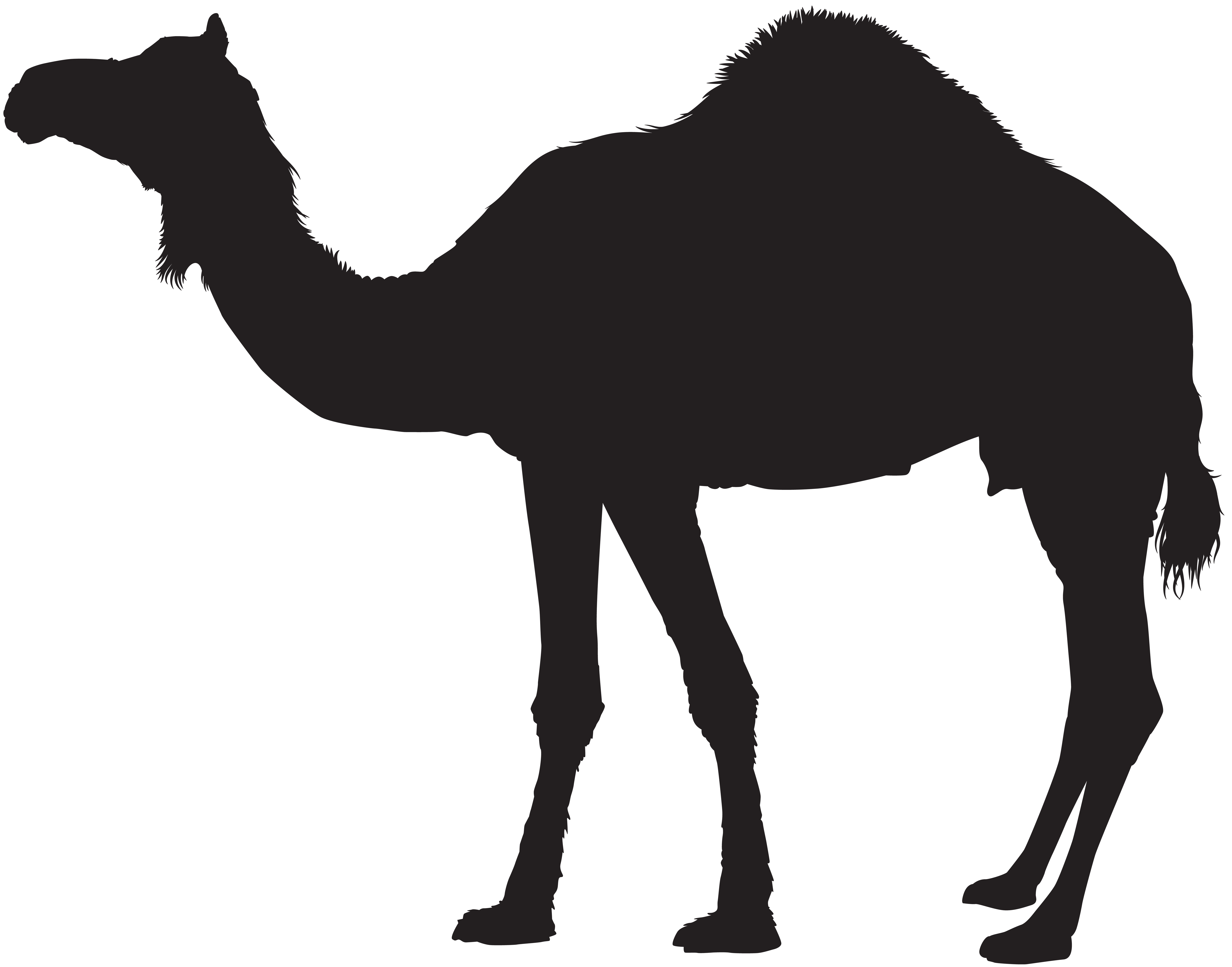 Camel clipart png picture black and white stock Camel Silhouette Transparent PNG Clip Art | Gallery Yopriceville ... picture black and white stock