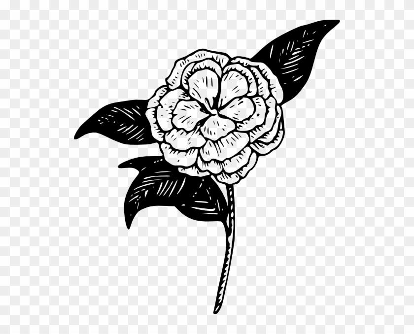 Camella clipart clipart transparent stock Peony Clipart - Clipart Best - Camellia Flower Clip Art, HD Png ... clipart transparent stock