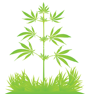Cannabis plant clipart vector library download Free Cannabis Cliparts, Download Free Clip Art, Free Clip Art on ... vector library download