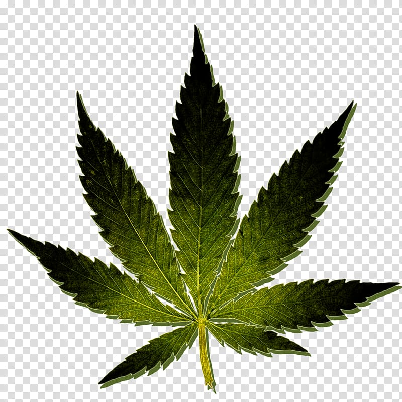 Cannibus clipart graphic black and white Medical cannabis Kush Hash oil Cannabis sativa, cannabis transparent ... graphic black and white
