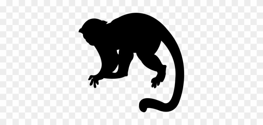 Capuchin clipart jpg black and white stock Monkey Silhouette Png - Capuchin Monkey Silhouette Png, Transparent ... jpg black and white stock
