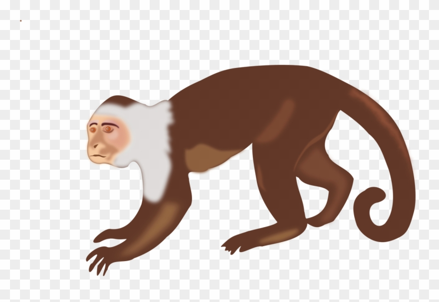 Capuchin clipart royalty free library Capuchin Monkey Clip Art - Png Download (#3460801) - PinClipart royalty free library