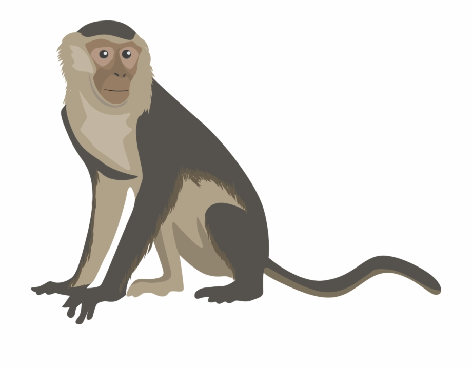 Capuchin monkey clipart clipart download Png Transparent Free - Capuchin Monkey Monkey Clipart Free PNG ... clipart download