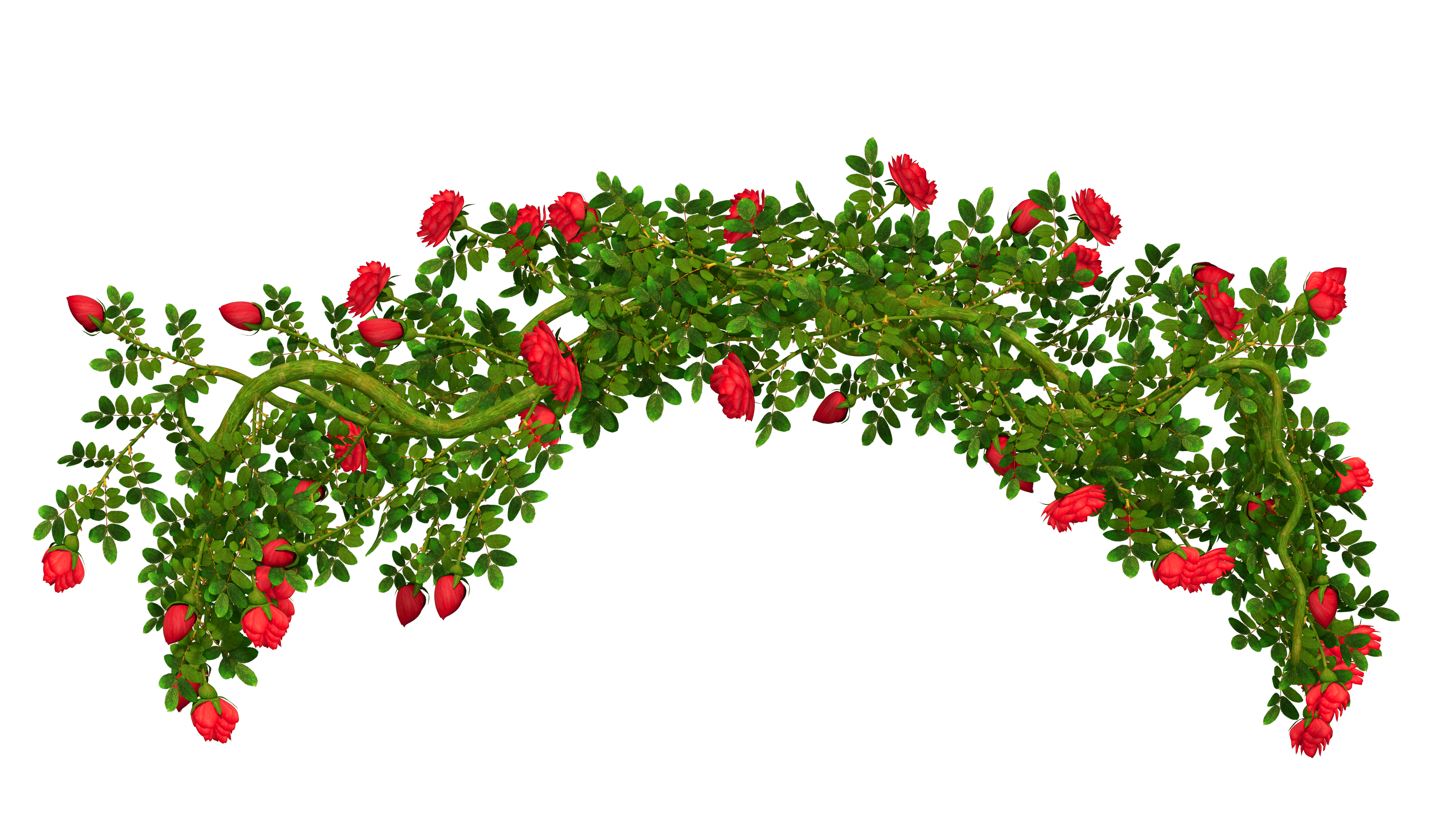 Car frame clipart clipart free download Rosebush Element PNG Clipart Picture | Gallery Yopriceville - High ... clipart free download