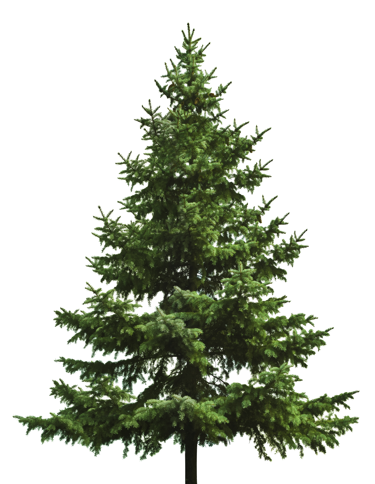 Elegant christmas tree clipart jpg black and white Christmas Tree Transparent PNG Pictures - Free Icons and PNG Backgrounds jpg black and white