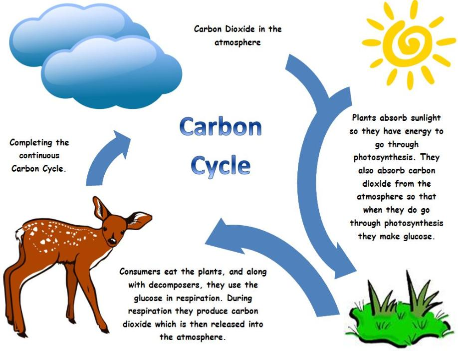 Carbon cycle clip art png freeuse Cycles of Matter png freeuse