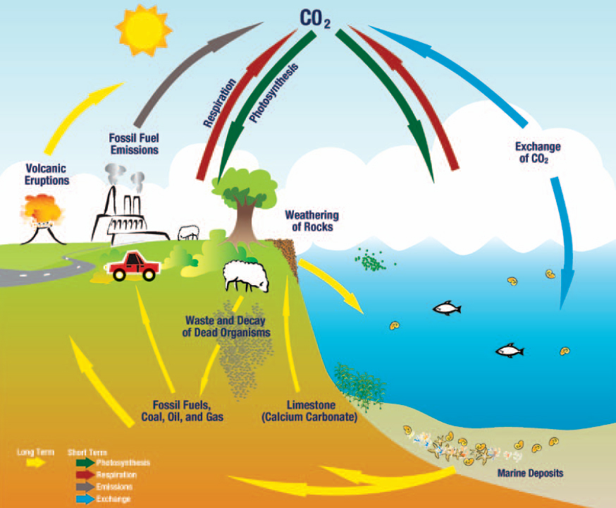 Carbon cycle clip art clipart free download Climate Science Investigations South Florida - Causes of Climate ... clipart free download