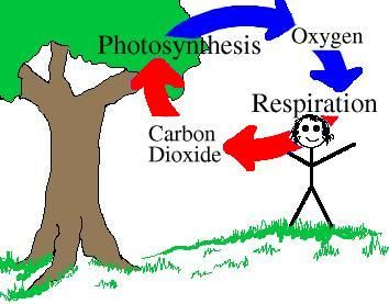 Carbon cycle clip art banner free Breathing Carbon Dioxide Clipart - Clipart Kid banner free