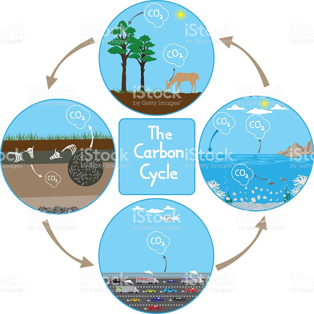 Carbon cycle clip art svg Carbon Cycle In Nature stock vector art 510592464 | iStock svg