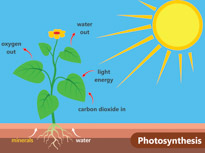 Carbon cycle clip art svg Search Results - Search Results for photosynthesis Pictures ... svg