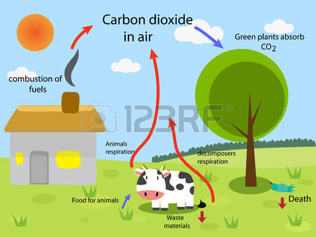 Carbon cycle clip art banner free 557 Carbon Cycle Stock Vector Illustration And Royalty Free Carbon ... banner free