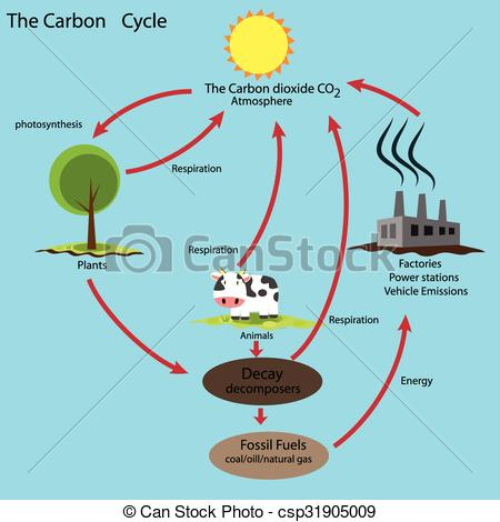 Carbon cycle clip art vector freeuse download Carbon cycle Stock Illustration Images. 307 Carbon cycle ... vector freeuse download