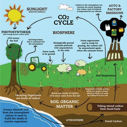 Carbon cycle clipart png library download 17 Best ideas about Carbon Cycle on Pinterest | 5th grade science ... png library download