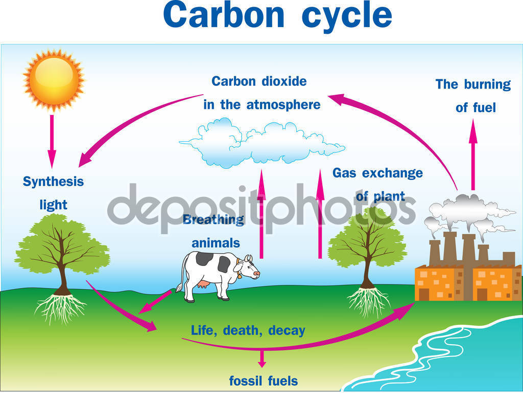 Carbon cycle clipart banner royalty free download Vector of Carbon cycle — Stock Vector © magemasher #129433896 banner royalty free download