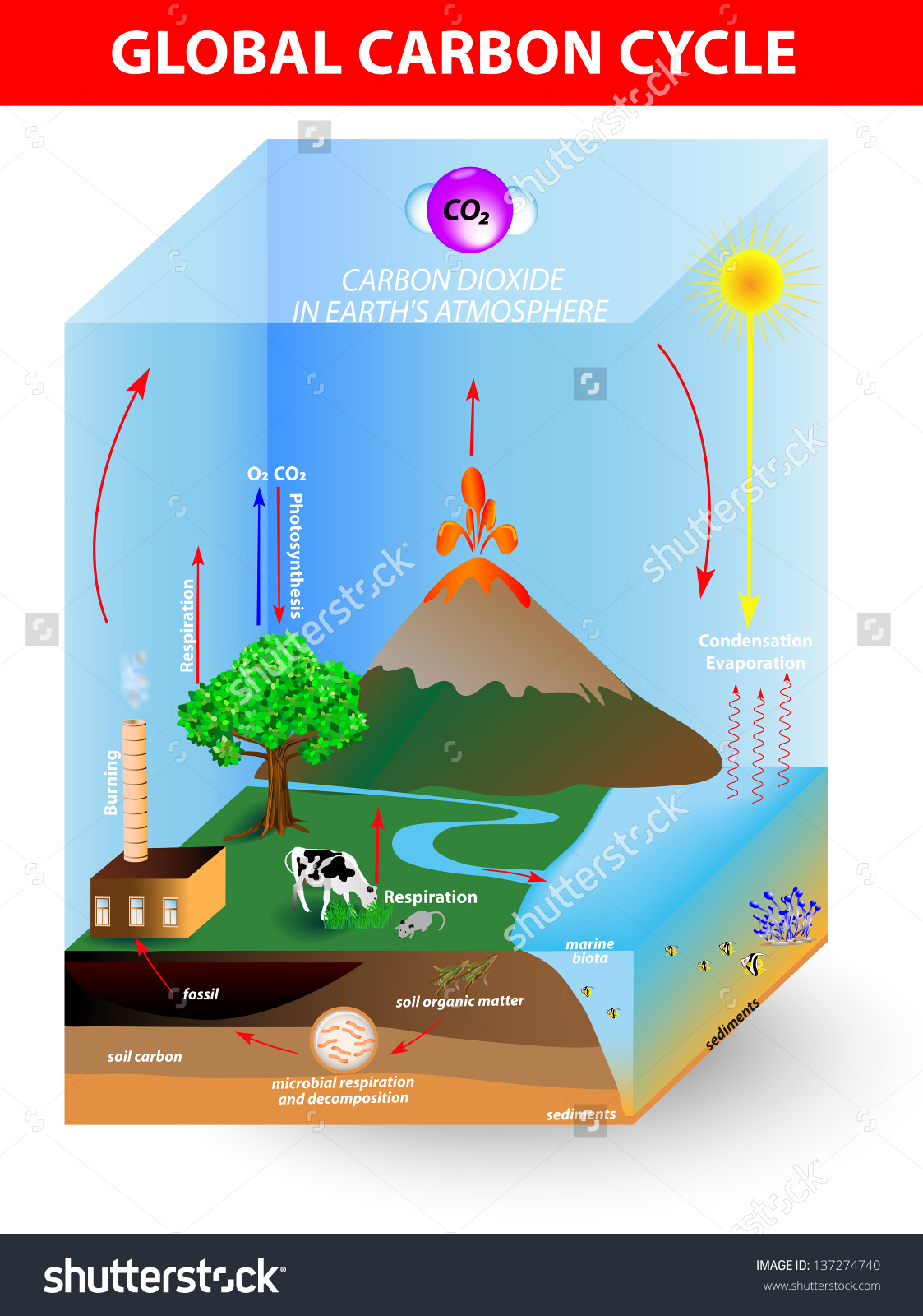 Carbon cycle clipart clip black and white stock Carbon Cycle Vector Diagram Shows Movement Stock Vector 137274740 ... clip black and white stock