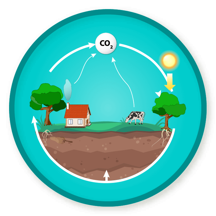 Carbon cycle clipart svg library download WittyWe svg library download