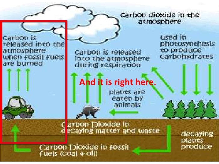 Carbon cycle clipart vector library CARBON AND NITROGEN CYCLES (Teach) vector library