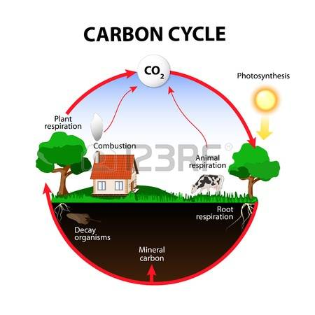 Carbon cycle clipart vector royalty free stock 557 Carbon Cycle Stock Vector Illustration And Royalty Free Carbon ... vector royalty free stock