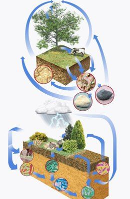 Carbon cycle clipart banner free 17 best ideas about Carbon Cycle on Pinterest | 5th grade science ... banner free