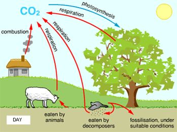 Carbon cycle clipart clip art free stock Diagram showing carbon cycle during the day | Homeschooling Ideas ... clip art free stock