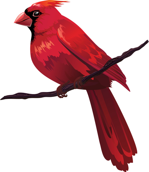 Cardinal on branch clipart clip art library stock Free Cardinal Clipart | Free download best Free Cardinal Clipart on ... clip art library stock