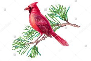 Cardinal on branch clipart clip freeuse stock Cardinal on branch clipart 8 » Clipart Portal clip freeuse stock
