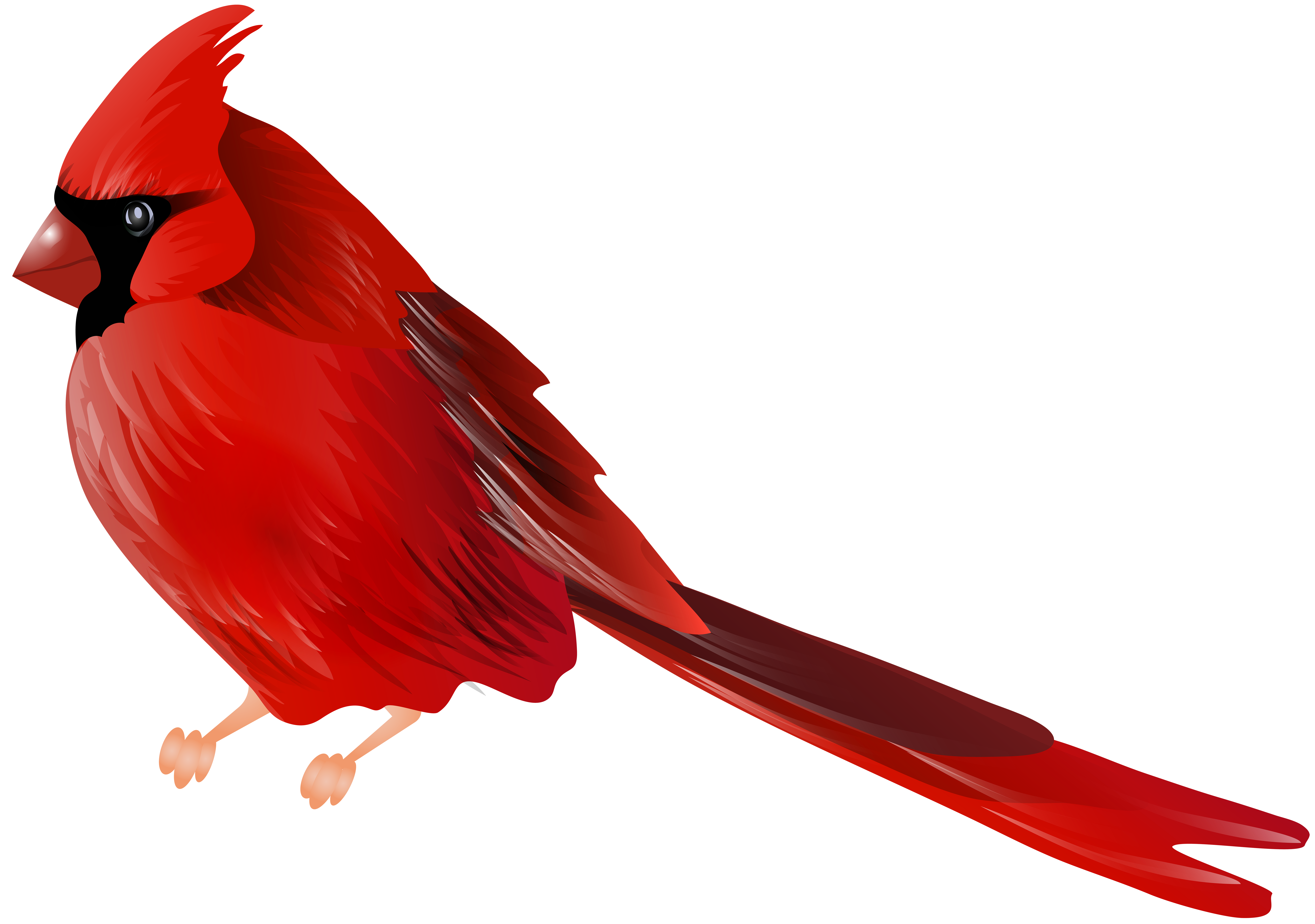 Cardinals clipart jpg transparent download Cardinals clip art clipart images gallery for free download | MyReal jpg transparent download