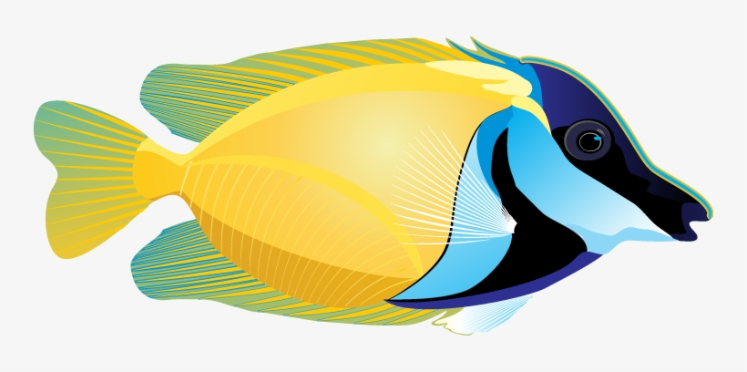 Caribbean fish clipart clip art royalty free download Marine Fish Clipart Face - Ocean With Fish Clip Art Transparent PNG ... clip art royalty free download