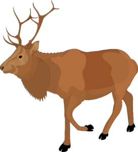 Caribou clipart