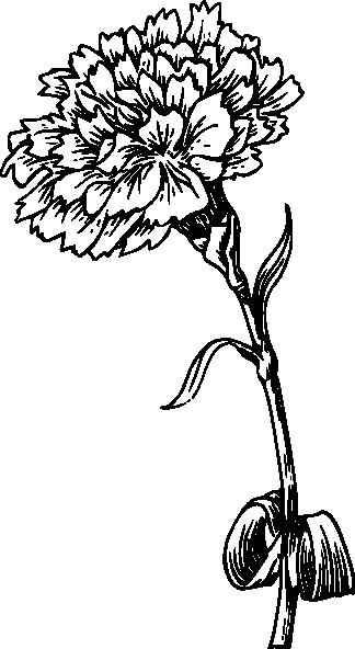Carnation clipart black